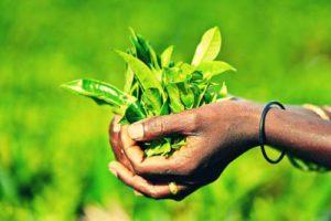 Остров Цейлон Шри-Ланка